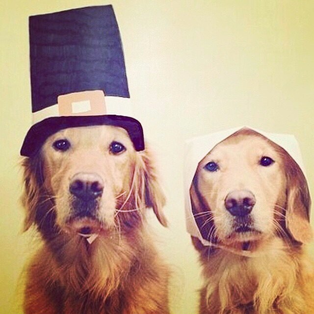 A very Happy Thanksgiving to all our fans who we are so thankful for! Adorable Pilgrim Pups via @dogsruleeverythingaroundme